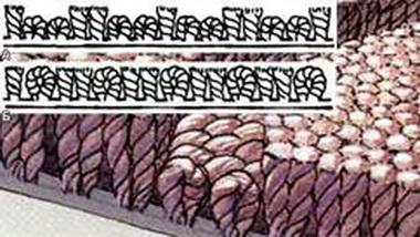 Комбинированное  ковровое покрытие.